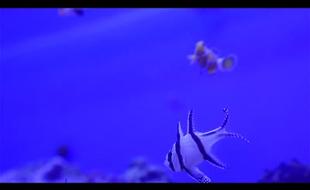 INTO THE BLUE Aquaristik